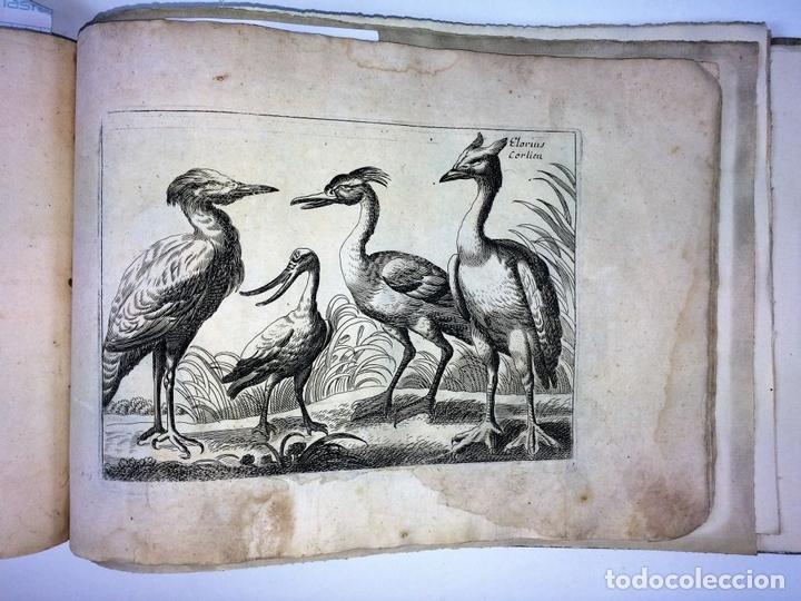 Arte: DIVERSAE AVIUM SPECIE STUDIOSISSIME AD VITAM DELINEATAE. ED. JOLLAIN. PARIS. CIRCA 1680 - Foto 23 - 90037432