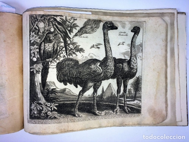 Arte: DIVERSAE AVIUM SPECIE STUDIOSISSIME AD VITAM DELINEATAE. ED. JOLLAIN. PARIS. CIRCA 1680 - Foto 24 - 90037432