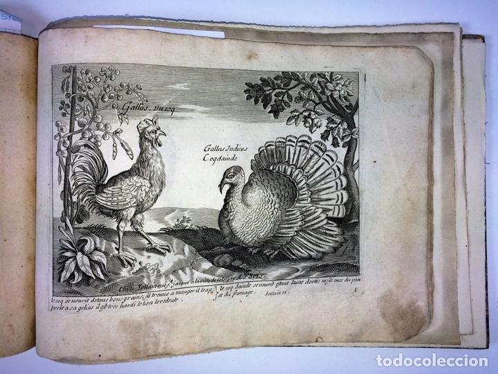 Arte: DIVERSAE AVIUM SPECIE STUDIOSISSIME AD VITAM DELINEATAE. ED. JOLLAIN. PARIS. CIRCA 1680 - Foto 25 - 90037432