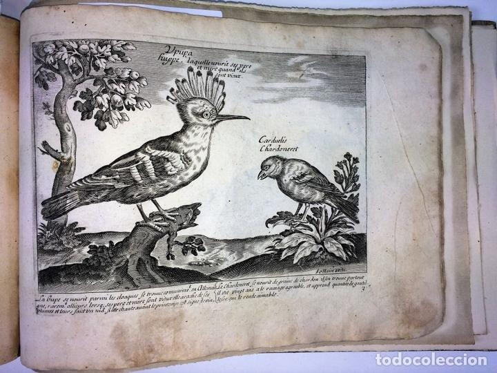 Arte: DIVERSAE AVIUM SPECIE STUDIOSISSIME AD VITAM DELINEATAE. ED. JOLLAIN. PARIS. CIRCA 1680 - Foto 27 - 90037432