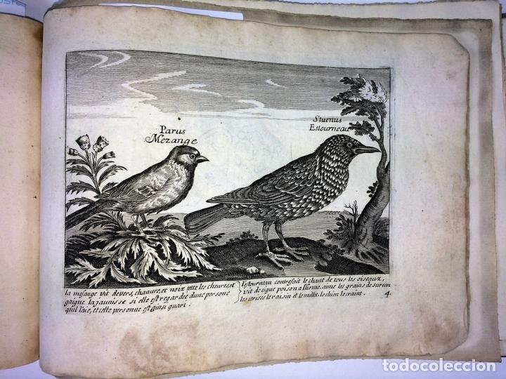 Arte: DIVERSAE AVIUM SPECIE STUDIOSISSIME AD VITAM DELINEATAE. ED. JOLLAIN. PARIS. CIRCA 1680 - Foto 28 - 90037432
