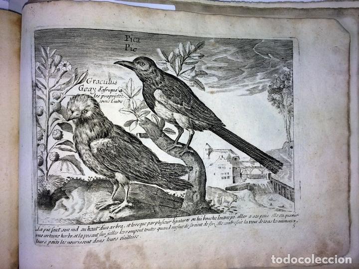 Arte: DIVERSAE AVIUM SPECIE STUDIOSISSIME AD VITAM DELINEATAE. ED. JOLLAIN. PARIS. CIRCA 1680 - Foto 29 - 90037432