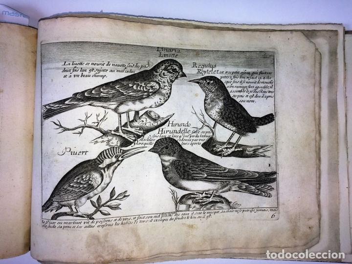 Arte: DIVERSAE AVIUM SPECIE STUDIOSISSIME AD VITAM DELINEATAE. ED. JOLLAIN. PARIS. CIRCA 1680 - Foto 30 - 90037432