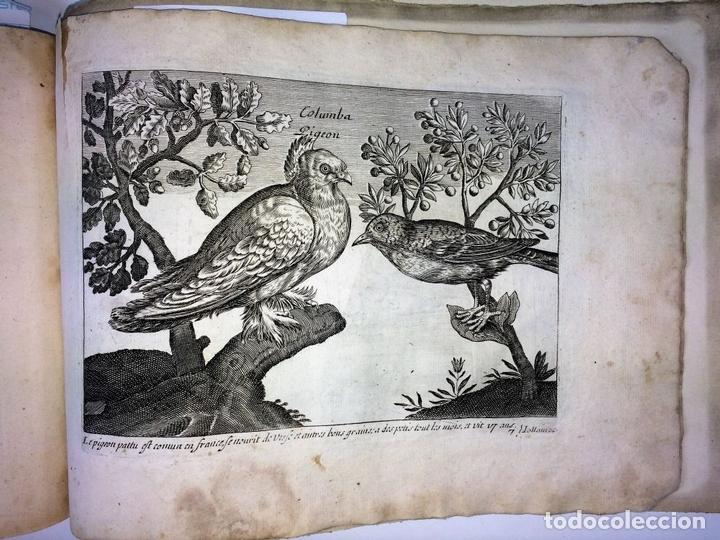 Arte: DIVERSAE AVIUM SPECIE STUDIOSISSIME AD VITAM DELINEATAE. ED. JOLLAIN. PARIS. CIRCA 1680 - Foto 31 - 90037432