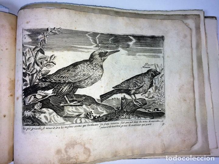 Arte: DIVERSAE AVIUM SPECIE STUDIOSISSIME AD VITAM DELINEATAE. ED. JOLLAIN. PARIS. CIRCA 1680 - Foto 33 - 90037432