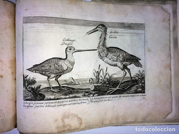 Arte: DIVERSAE AVIUM SPECIE STUDIOSISSIME AD VITAM DELINEATAE. ED. JOLLAIN. PARIS. CIRCA 1680 - Foto 34 - 90037432