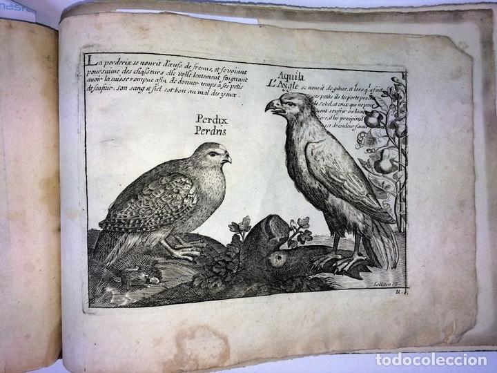 Arte: DIVERSAE AVIUM SPECIE STUDIOSISSIME AD VITAM DELINEATAE. ED. JOLLAIN. PARIS. CIRCA 1680 - Foto 35 - 90037432
