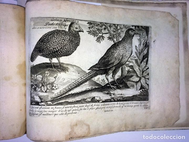 Arte: DIVERSAE AVIUM SPECIE STUDIOSISSIME AD VITAM DELINEATAE. ED. JOLLAIN. PARIS. CIRCA 1680 - Foto 36 - 90037432
