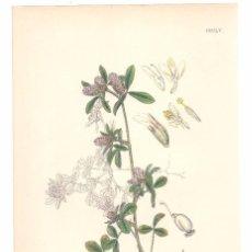 Arte: BOTÁNICA FABACEAS TRIFOLIUM BOCCONI LITOGRAFÍA COLOREADA 1863 ENGLISH BOTANY. SOWERBY. Lote 98725951