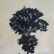 Arte: DANIEL LANG: PAISAJE, 1980 / AGUAFUERTE FIRMADO Y NUMERADO A LÁPIZ.. Lote 102023975