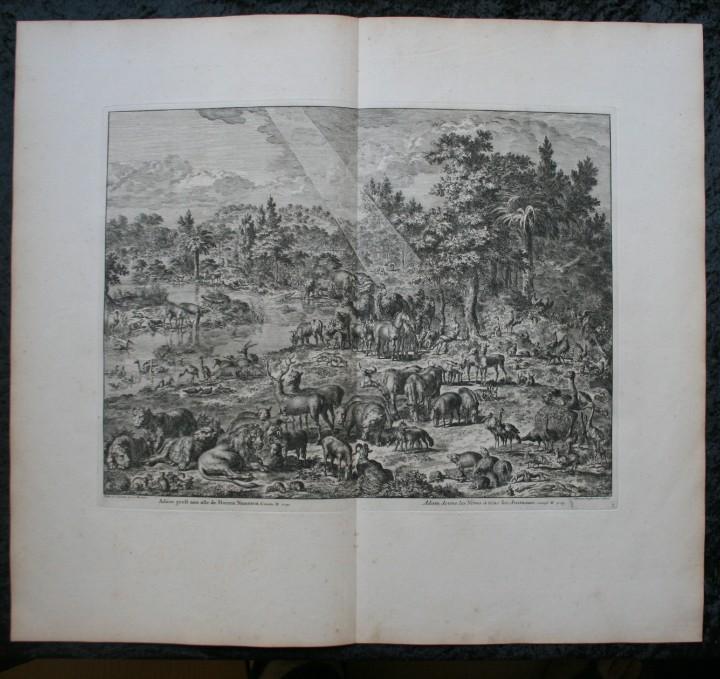 Arte: 1729 - GRABADO - BIBLIA - ADAN PUSO NOMBRES A LOS ANIMALES - Johannes Luyken - GRAN FORMATO - Foto 2 - 55713149