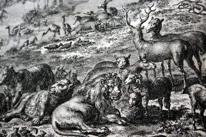 Arte: 1729 - GRABADO - BIBLIA - ADAN PUSO NOMBRES A LOS ANIMALES - Johannes Luyken - GRAN FORMATO - Foto 6 - 55713149