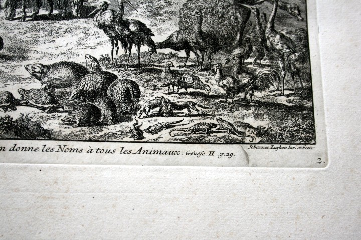 Arte: 1729 - GRABADO - BIBLIA - ADAN PUSO NOMBRES A LOS ANIMALES - Johannes Luyken - GRAN FORMATO - Foto 8 - 55713149