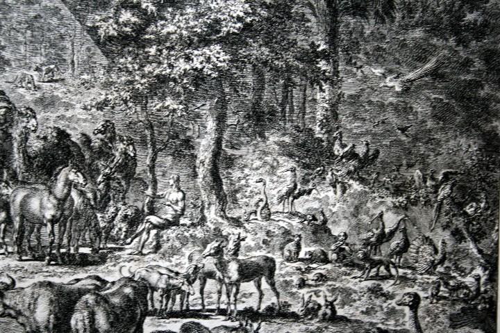 Arte: 1729 - GRABADO - BIBLIA - ADAN PUSO NOMBRES A LOS ANIMALES - Johannes Luyken - GRAN FORMATO - Foto 9 - 55713149