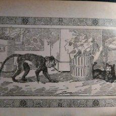 Arte: ANTIGUO GRABADO HISTORIA DE LA LITERATURA - LEER - EL MONO Y EL GATO. Lote 108106891