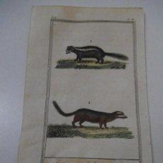 Arte: MOFETA CHILE / PEKAN - GRABADO ILUMINADO A MANO - 1835 - BUFFON - CUVIER. Lote 112929671