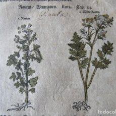 Arte: 1560-RUTA.MEDICINAL.TÓXICA.PLANTAS.FLORES.ARBUSTOS.DAVID KANDEL.HOJA GRABADO.ORIGINAL. Lote 113284263