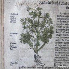 Arte: 1560-PEUCEDANUM.PASTIZALES.MATORRAL..PLANTAS.FLORES.ARBUSTOS.DAVID KANDEL.HOJA GRABADO.ORIGINAL. Lote 113284747