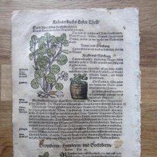 Arte: 1560-CAPPARIS.RUBUS.ZARZAMORA.MORA.ZARZA.PLANTAS.FLORES.ARBUSTOS.DAVID KANDEL.HOJA GRABADO.ORIGINAL. Lote 113285235