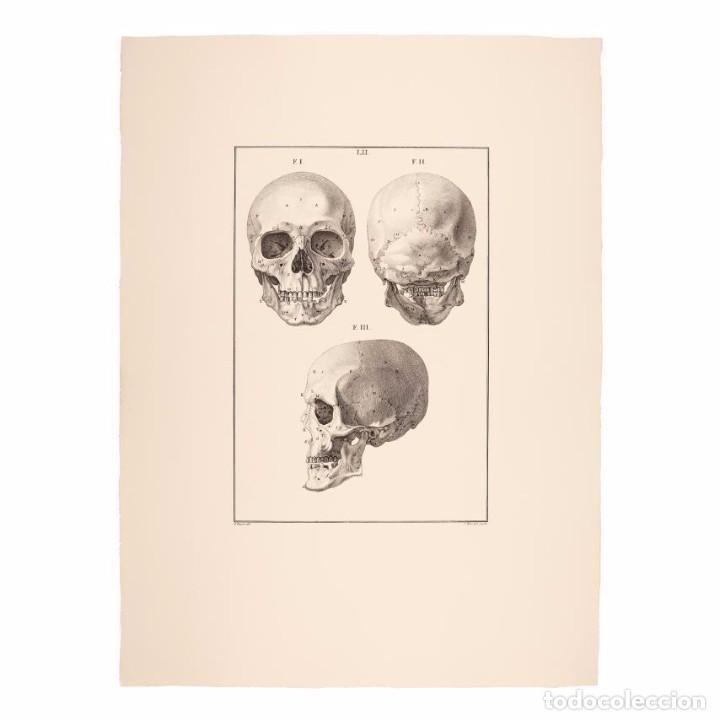GRABADO ESTUDIO DE LA CALAVERA HUMANA. 76 X 56 CM (Arte - Grabados - Antiguos hasta el siglo XVIII)