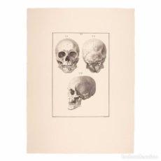 Arte: GRABADO ORIGINAL ANTIGUO. ESTUDIO DE LA CALAVERA HUMANA. 76 X 56 CM. Lote 115173939