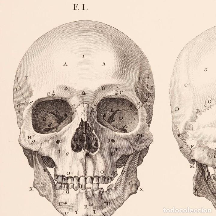 Arte: Grabado Estudio de la Calavera Humana. 76 x 56 cm - Foto 2 - 115173939