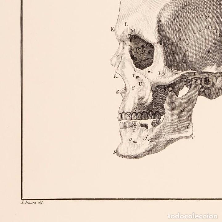 Arte: Grabado Estudio de la Calavera Humana. 76 x 56 cm - Foto 3 - 115173939