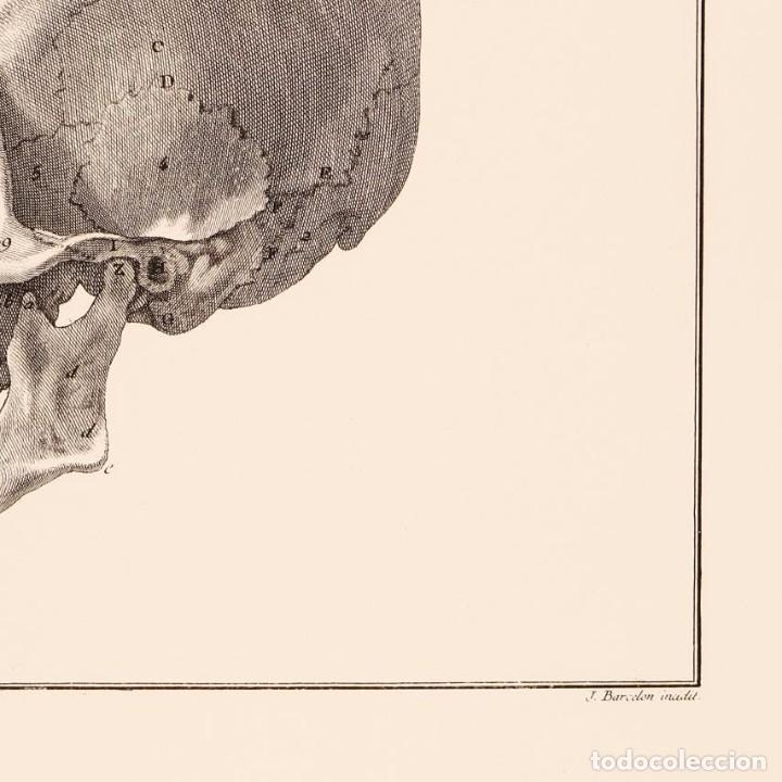 Arte: Grabado Estudio de la Calavera Humana. 76 x 56 cm - Foto 4 - 115173939