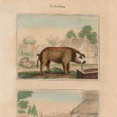 Arte: PORCINOS CERDOS HISTORIA NATURAL BUFFON GRABADO COLOREADO A MANO. Lote 116542335