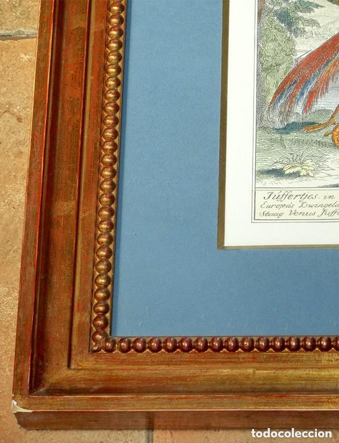 exquisito cartel enmarcado - aves indias occide - Comprar Grabados ...