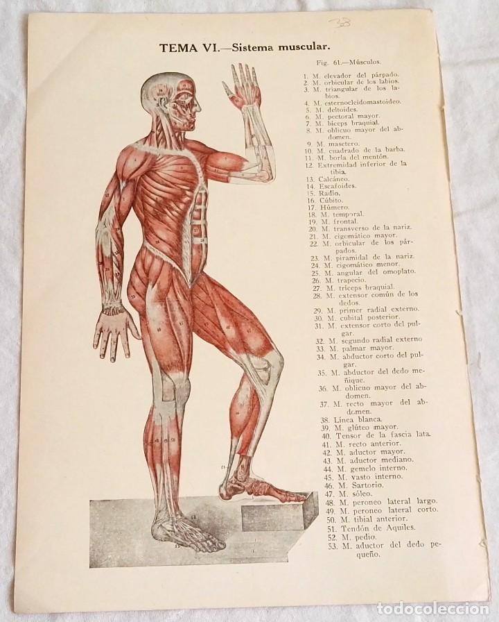 antiguo grabado medicina - cuerpo humano - sist - Comprar Grabados ...