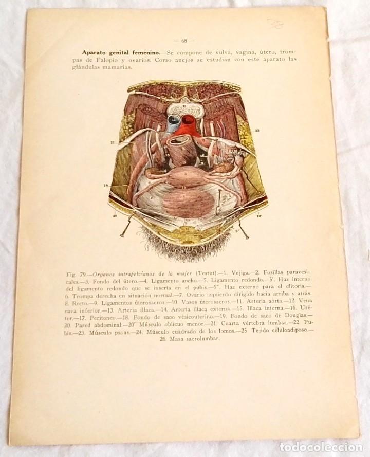 Famoso Fotos Humanos Pennis Adorno - Imágenes de Anatomía Humana ...