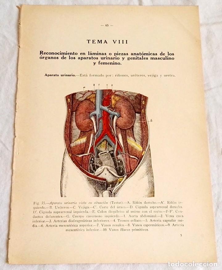 antiguo grabado medicina - cuerpo humano - apar - Comprar Grabados ...