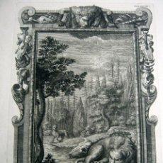 Arte: 1731 GRABADO AL COBRE - LEON Y LEONA - JOHANN JAKOB SCHEUCHZER - TYROFT SCULPS ANIMALIA XVIII. Lote 125962771