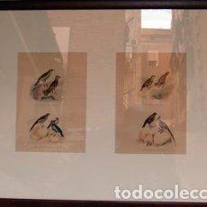 Arte: PROCEDENTE DEL CONDE BUFFON - GRABADOS DE AVES COLOREADOS. Lote 125999436