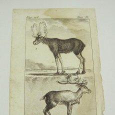 Arte: ANTIGUO GRABADO DE ANIMALES. S.XVIII. L´ELAN. LE RENNE.. Lote 128650063