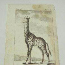 Arte: ANTIGUO GRABADO DE ANIMALES. S.XVIII. LA GIRAFFE.. Lote 128650355