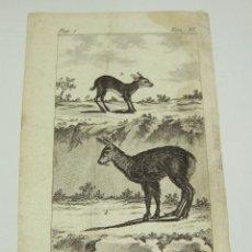Arte: ANTIGUO GRABADO DE ANIMALES. S.XVIII. LE MUSC. LE CHEVROTAIN.. Lote 128650659