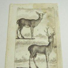 Arte: ANTIGUO GRABADO DE ANIMALES. S.XVIII. LE CERF. LA BICHE.. Lote 128650859