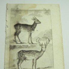 Arte: ANTIGUO GRABADO DE ANIMALES. S.XVIII. LE DAIM. LE CHEVREUIL.. Lote 128651043