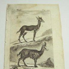 Arte: ANTIGUO GRABADO DE ANIMALES. S.XVIII. LA GAZELLE. LE CHAMOIS.. Lote 128651215