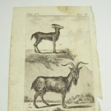 Arte: ANTIGUO GRABADO DE ANIMALES. S.XVIII. LE BOUC. LE BROUQUETIN.. Lote 128651435
