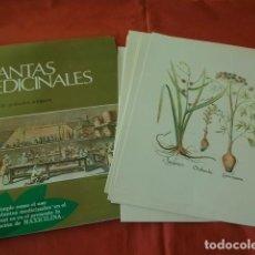 Arte: COLECCIÓN DE GRABADOS ANTIGUOS PLANTAS MEDICINALES - 12 LÁMINAS CON SU CARPETA. Lote 129008463