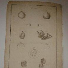 Art: GRABADO DEL ATLAS DEL VIAJE DE LA PEROUSE. POULETTES. 1787.. Lote 130539392