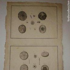 Art: GRABADO DEL ATLAS DEL VIAJE DE LA PEROUSE. ERIZOS DEL NOROESTE DE AMÉRICA. 1787.. Lote 130539871