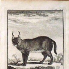 Arte: JACQUES DE SEVE. GRABADO LE CARACAL. 1761. HISTOIRE NATURELLE DE BUFFON. 25X19 CM. EN BUEN ESTADO.. Lote 132919090