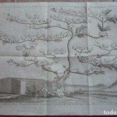 Arte: AÑO 1766. ARBOR GENEALOGICA DESCENDENTIUM NOE E QUO OMNES MUNDI NATIONES POST DILUVIUM ORTAE SUNT.... Lote 132951258