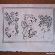 Arte: FRUTAS TROPICALES DE AMÉRICA DEL SUR 1754. N. BELLIN/ A. PREVOST. Lote 133755206