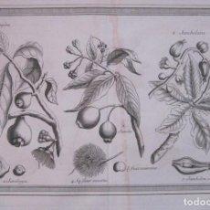 Arte: FRUTAS TROPICALES DE AMÉRICA DEL SUR II 1754. N. BELLIN/ A. PREVOST. Lote 133771530