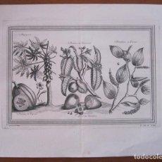 Arte: FRUTAS TROPICALES DE AMÉRICA DEL SUR I 1754. N. BELLIN/ A. PREVOST. Lote 133771926